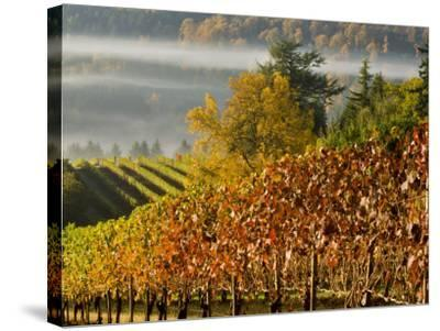 Fog Pools in a Finger of the Willamette Valley, Oregon, USA-Janis Miglavs-Stretched Canvas Print