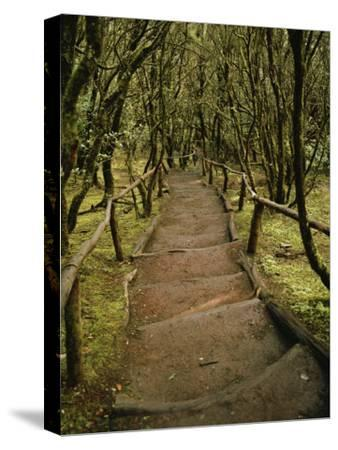 Dirt Hiking Path Through the Garajonay National Park on La Gomera-xPacifica-Stretched Canvas Print