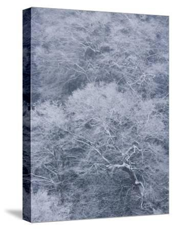 January Storm Covers Newfound Gap with Snow-Michael Melford-Stretched Canvas Print