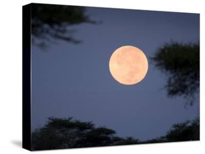 Full Moon Rises over the Serengeti Plains-Ralph Lee Hopkins-Stretched Canvas Print
