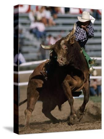 Rodeo Competitor in a Steer Riding Event-Chris Johns-Stretched Canvas Print