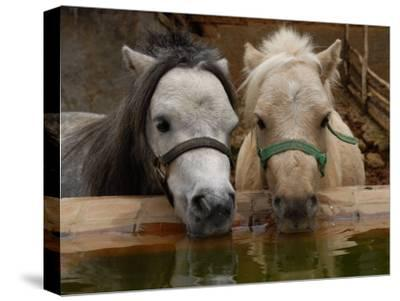 Two Ponies Meet for a Refreshing Drink of Water-Medford Taylor-Stretched Canvas Print