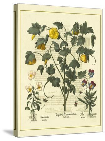 Besler Floral VI-Besler Basilius-Stretched Canvas Print
