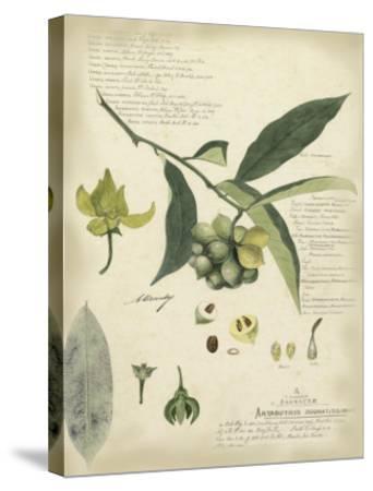Descube Botanical II-A^ Descube-Stretched Canvas Print