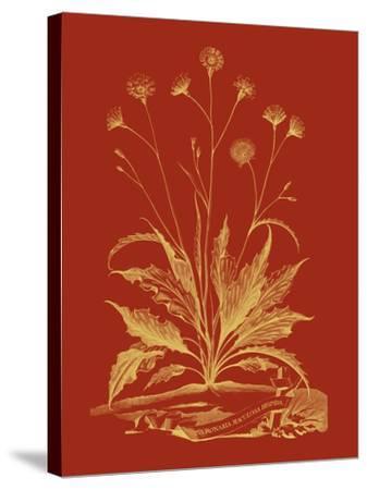 Paprika Bouquet III-Vision Studio-Stretched Canvas Print