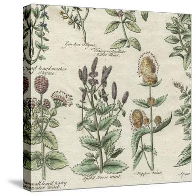 Delicate Garden IV-Vision Studio-Stretched Canvas Print
