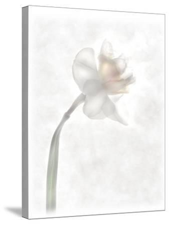 Still Life of a Flower-Joyce Tenneson-Stretched Canvas Print
