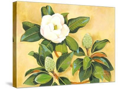 Southern Magnolia II-Kris Taylor-Stretched Canvas Print