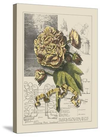 Garden in June II-Debbie Bookman-Stretched Canvas Print