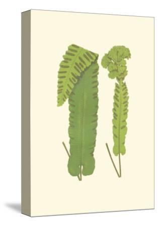 Woodland Ferns VIII-Edward Lowe-Stretched Canvas Print