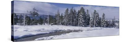 Scenic View of Pine Trees Coated with Snow in Winter-Jeff Foott-Stretched Canvas Print