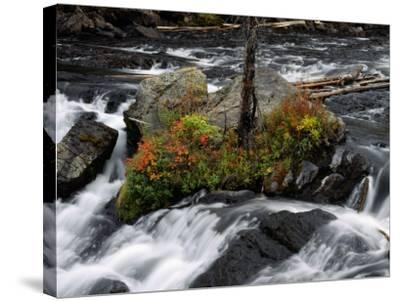 Lewis Falls, Yellowstone Np, Wyoming-Jeff Foott-Stretched Canvas Print