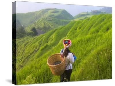 China, Guangxi Province, Longsheng, Zhuang Woman with Rice Terraces in the Mountain-Keren Su-Stretched Canvas Print