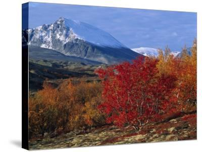 Autumn Colours in Norrland, Sweden--Stretched Canvas Print