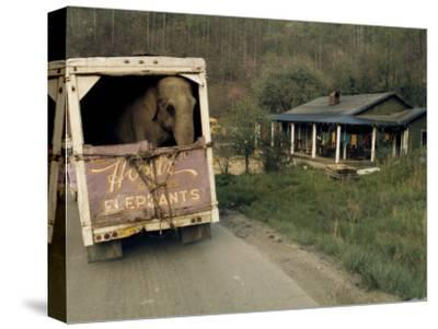An Elephant Rides to the Next Show in the Back of a Circus Truck-Jonathan Blair-Stretched Canvas Print