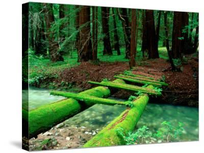 Bridge Covered in Moss over Little Sur River-Douglas Steakley-Stretched Canvas Print