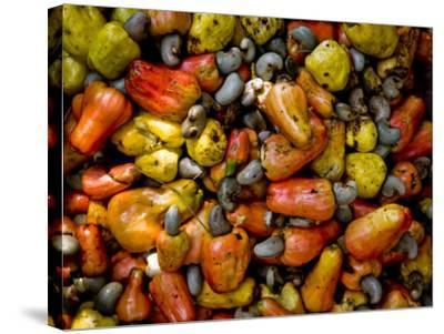 Fermenting Cashew Fruits, with Nut Attached, to Make Fenny at Sahakari Spice Farm, Ponda-Greg Elms-Stretched Canvas Print