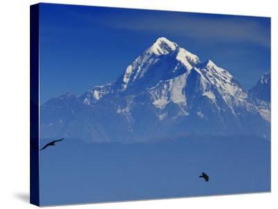 Sunrise on Nanda Devi Peak in Indian Himalayas-Michael Gebicki-Stretched Canvas Print