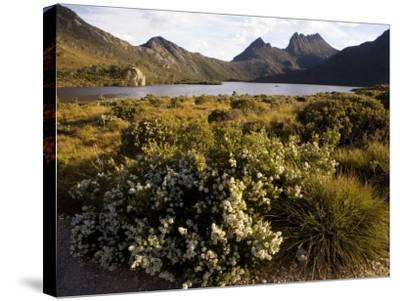 Dove Lake and Cradle Mountain-Andrew Bain-Stretched Canvas Print