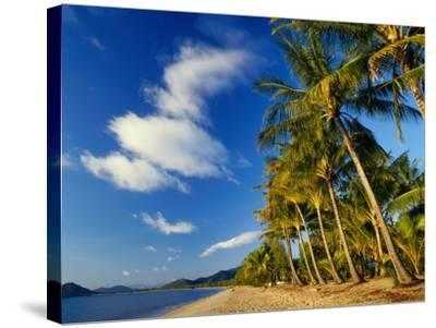 Palm Trees on Palm Cove Beach-Richard l'Anson-Stretched Canvas Print