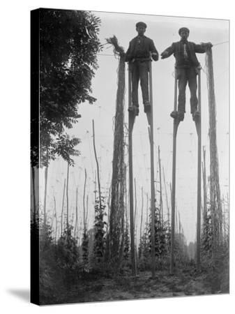 Stilt Walkers--Stretched Canvas Print