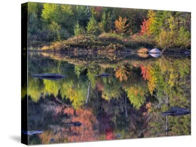 Shoreline Reflection, Lily Pond, White Mountain National Forest, New Hampshire, USA-Adam Jones-Stretched Canvas Print