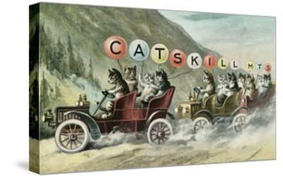 Cats in Cars, Catskill Mountains, New York--Stretched Canvas Print