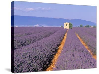 Lavender Fields, Provence, France-Jon Arnold-Stretched Canvas Print