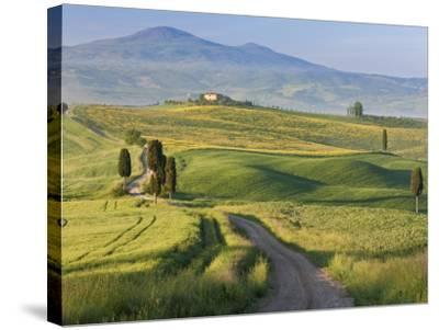 Track, San Quirico D'Orcia, Val D'Orcia, Tuscany, Italy-Peter Adams-Stretched Canvas Print