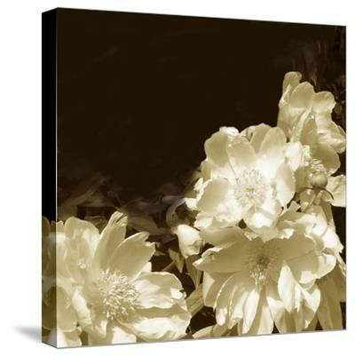 Non-Embellished Sepia Peonies II--Stretched Canvas Print