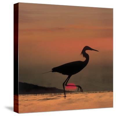 Little Egret (Egretta Garzetta) Silhouetted at Sunset, Africa-Tim Fitzharris/Minden Pictures-Stretched Canvas Print