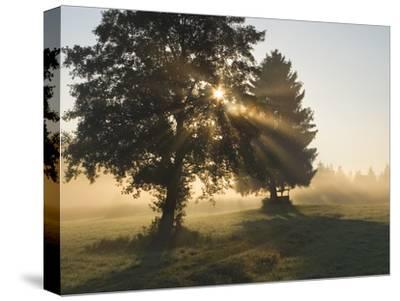 Sun Shining Through Trees and Morning Mist, Upper Bavaria, Germany-Konrad Wothe-Stretched Canvas Print