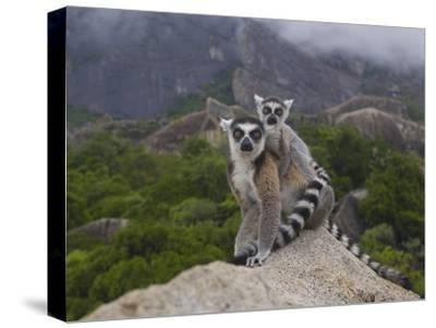 Ring-Tailed Lemur (Lemur Catta) Mother and Young, Near Andringitra Mountains, Madagascar-Pete Oxford-Stretched Canvas Print