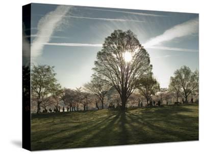 Cherry Blossoms at the Tidal Basin in Washington D.C.-Karen Kasmauski-Stretched Canvas Print