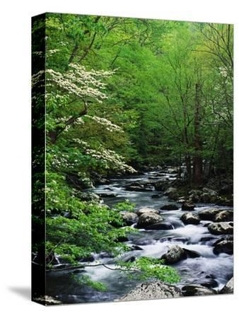 Stream in Lush Forest-Ron Watts-Stretched Canvas Print