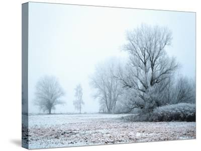 A Meadow in Winter--Stretched Canvas Print