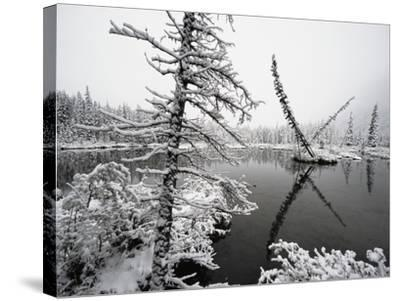 Pond and Forest in Winter-John Eastcott & Yva Momatiuk-Stretched Canvas Print