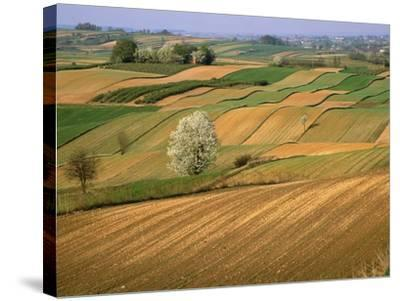 Agricultural Fields on Farm-John Eastcott & Yva Momatiuk-Stretched Canvas Print