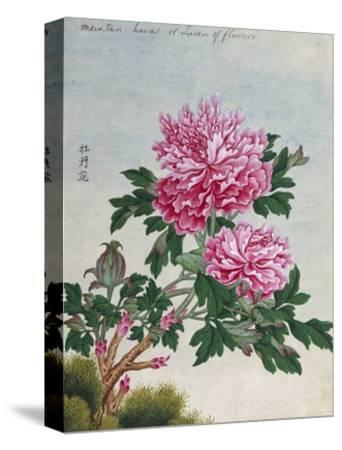 Chinese Watercolor of Pink Peonies--Stretched Canvas Print