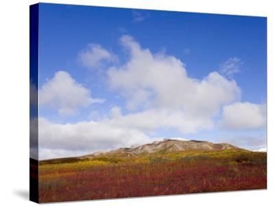 Mountain Range in Tundra Landscape-John Eastcott & Yva Momatiuk-Stretched Canvas Print