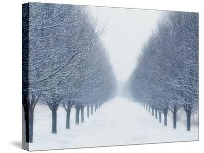 Tree-lined Road in Winter-Robert Llewellyn-Stretched Canvas Print