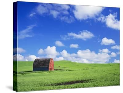 Old Barn Amidst Pea Field-Terry Eggers-Stretched Canvas Print