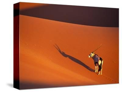 Oryx Antelope on Sossusvlei Sand Dune-Theo Allofs-Stretched Canvas Print