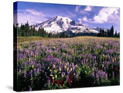 Wildflowers in Mt. Rainier National Park-Stuart Westmorland-Stretched Canvas Print
