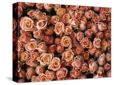 Pink Roses at Albert Kuyp Market-Owen Franken-Stretched Canvas Print