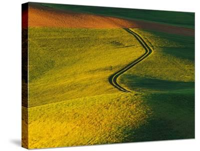 Wheat and Pea Fields-Darrell Gulin-Stretched Canvas Print