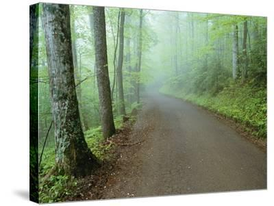 Road in Great Smoky Mountains National Park-Darrell Gulin-Stretched Canvas Print