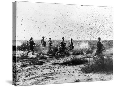 Morocco: Locusts, 1954--Stretched Canvas Print