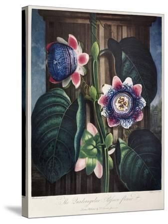 Thornton: Passion-Flower-James, The Elder Hopwood-Stretched Canvas Print