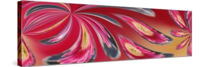 Flower Refracted in Waterdrop-Adam Jones-Stretched Canvas Print